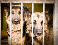 Innocent and sad brothers. These dogs were stray, now they wait for new owner and a happier life Stock Photo