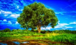 Inny osamotniony drzewo Zdjęcia Royalty Free