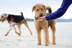 Inocencia del perro como descubre burbujas por primera vez en la playa foto de archivo libre de regalías