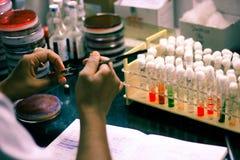 Inoculação bacteriana em um meio de cultura do ágar do tubo de ensaio usando o laço da inoculação pelo técnico de laboratório do  imagens de stock