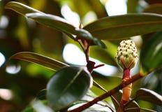 Inom blom Royaltyfri Fotografi