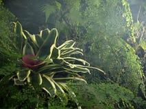 Inom drivhuset: bromeliaväxt och gräsplanbakgrund av venushårormbunken arkivbilder