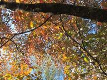 Inom en Autumn Dogwood Royaltyfri Bild