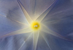 Inom en blå blomma Arkivfoto