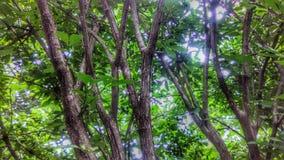 Inom en buske i Missouri royaltyfria bilder