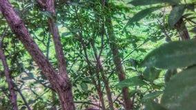 Inom en buske i Missouri royaltyfri fotografi