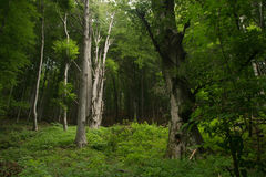 Inom skogen Arkivfoto