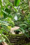 Inomhus av det tropiska djungelväxthuset Tropiska nya och exotiska växter Royaltyfri Bild