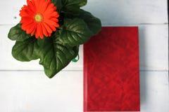 Inomhus blomma och röd bok Royaltyfri Bild