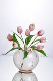 Inomhus genomskinlig blomkruka Royaltyfri Foto
