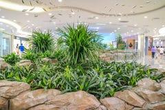 Inomhus grönska arkivbilder