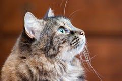 Inomhus katt royaltyfri fotografi