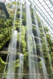 Inomhus trädgård och vattenfall Arkivbilder