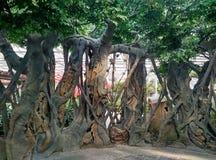 Inomhus trädgårds- växter Royaltyfria Bilder
