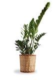 inomhus trevlig växt Arkivbild
