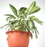 inomhus växt 10 Arkivfoto
