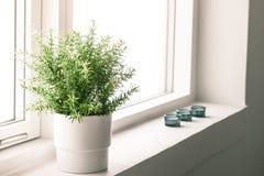 Inomhus växt i ett badrumfönster Royaltyfria Foton