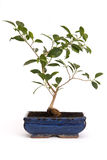 inomhus växter Arkivfoton
