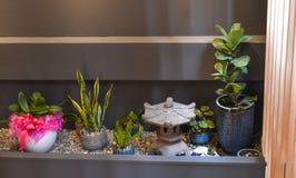 Inomhus växter i en modern hemtrevlig inre royaltyfri foto