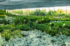 Inomhus växthusmarknad på sommar arkivbilder