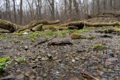 Inond? par une terre sauvage souterraine de source d'eau de source de l'eau de for?t dans la for?t photographie stock