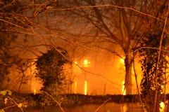 Inondation d'arbre Image libre de droits