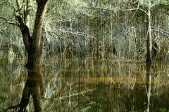 Inondation de forêt de la Floride Image stock