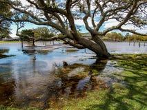 Inondation de parc d'héritage de Currituck après tempête image stock