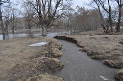 Inondation de ressort dans la forêt Image stock