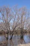 Inondation de ressort dans les banlieues Photo libre de droits