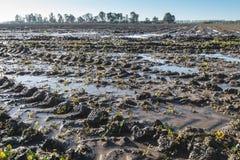 Inondation sur des terres cultivables image libre de droits