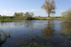 Inondation sur une petite rivière au printemps image stock