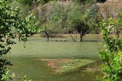 Inondazione del fiume nello Spring Valley del fiume di Cerna Fotografia Stock