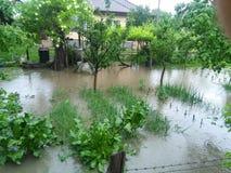 Inondazione del giardino Immagini Stock