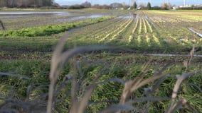 Inondazione del terreno coltivabile