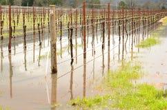 Inondazione del vino Fotografia Stock