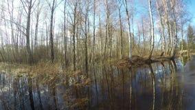Inondazione dell'acqua sorgiva nella foresta della betulla, lasso di tempo 4K archivi video
