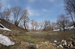 Inondazione della primavera Immagini Stock