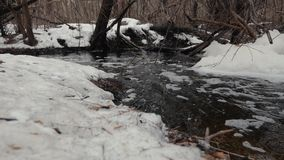 Inondazione della primavera in un movimento nevoso della foresta di acqua attraverso la foresta archivi video