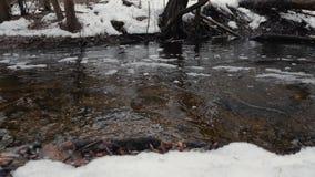 Inondazione della primavera in un movimento nevoso della foresta di acqua attraverso la foresta video d archivio