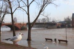Inondazione di Francoforte sul Meno Immagine Stock Libera da Diritti