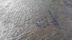 Inondazione dopo la pioggia stock footage