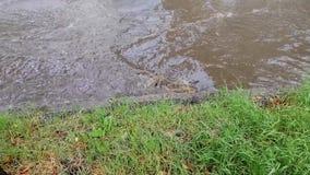 Inondazione dopo la pioggia archivi video