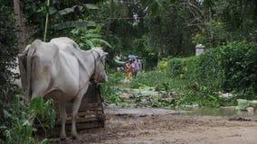 Inondazione, il Mekong, Cambogia stock footage