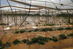 inondazioni Fotografie Stock