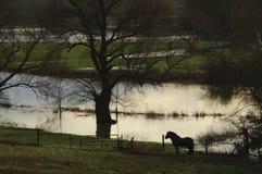 Inondazioni Buckinghamshire Inghilterra Regno Unito del Regno Unito 2014 Immagine Stock Libera da Diritti