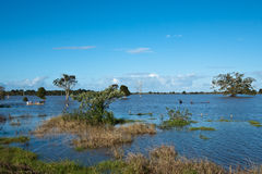 Inondazioni di Taree Immagine Stock