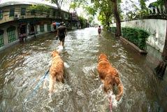 Inondazioni mega a Bangkok in Tailandia. Immagine Stock