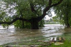 Inondazioni Praga 2013 - isola di Stvanice sommersa Fotografie Stock