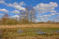 Inondez avec les arbres et le roseau nus d'hiver dans un marais un jour ensoleillé image stock